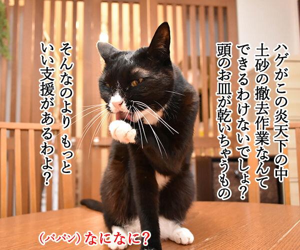 豪雨災害のボランティアに行こうかしら? 猫の写真で4コマ漫画 3コマ目ッ