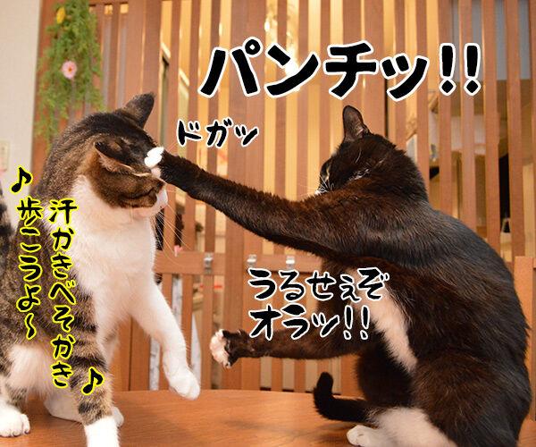 ワン・ツー ワン・ツー しあわせは歩いてこないのよッ 猫の写真で4コマ漫画 4コマ目ッ