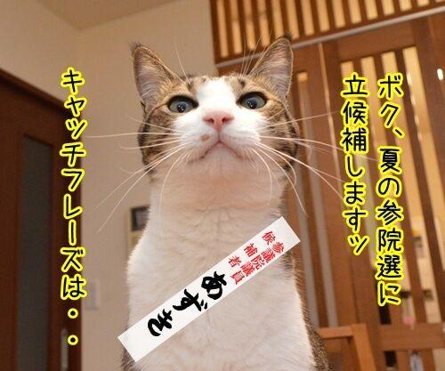 あずだいは参院選に立候補しますッ 猫の写真で4コマ漫画 1コマ目ッ