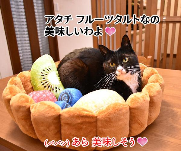 フルーツタルトにゃんことロールケーキにゃんこ 猫の写真で4コマ漫画 1コマ目ッ