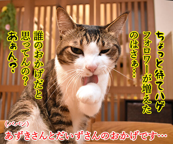 インスタグラムのフォロワーさんが2万人を超えたのよッ 猫の写真で4コマ漫画 3コマ目ッ