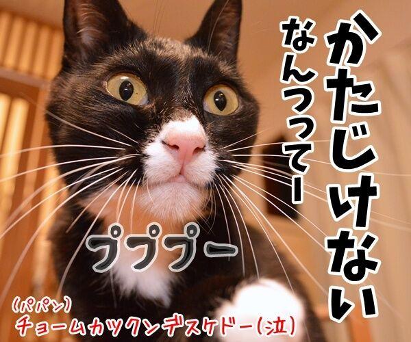 遊んだオモチャはかたづけてよねッ 猫の写真で4コマ漫画 4コマ目ッ