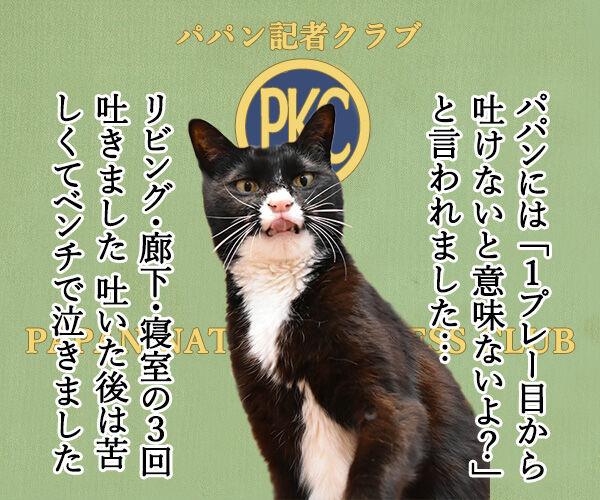 日大悪質タックル選手の記者会見みたいに… 猫の写真で4コマ漫画 3コマ目ッ