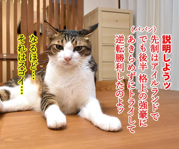 ラグビーワールドカップ日本代表がアイルランドに歴史的勝利なのッ 猫の写真で4コマ漫画 2コマ目ッ