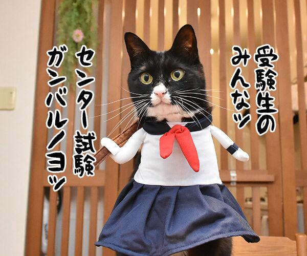 受験生のみんなッ センター試験ガンバルノヨー 猫の写真で4コマ漫画 1コマ目ッ