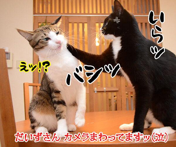 緊急取調室 猫の写真で4コマ漫画 4コマ目ッ