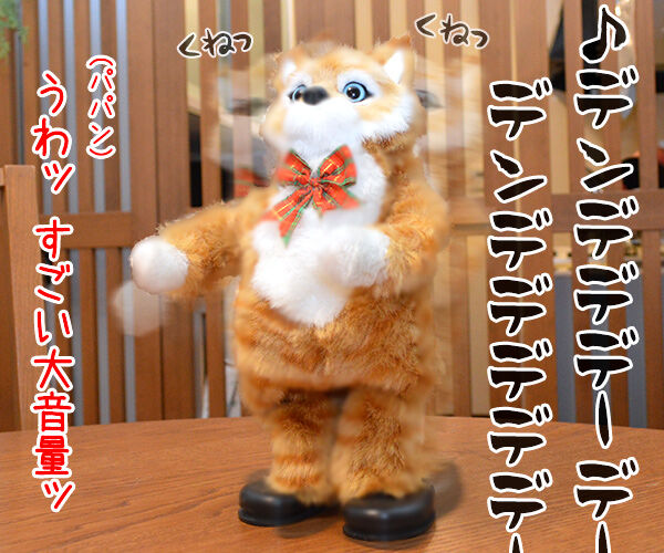 『ねこのための音楽~Music for Cats~』を聴かせてみたのッ 猫の写真で4コマ漫画 3コマ目ッ