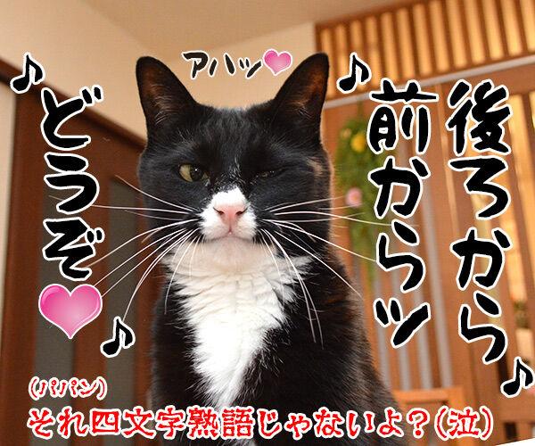 夏休みの宿題が終わらないの… 猫の写真で4コマ漫画 4コマ目ッ