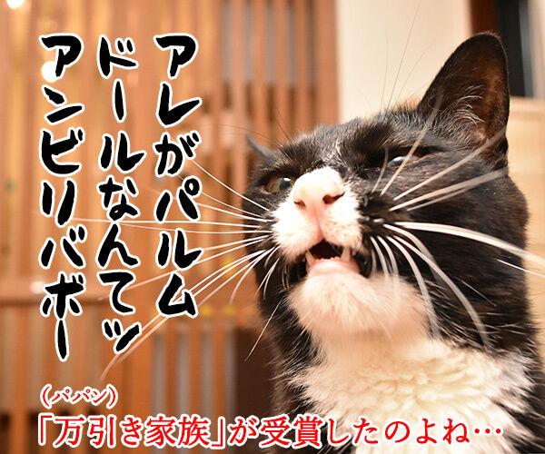 映画『万引き家族』はカンヌでパルムドールなのッ 猫の写真で4コマ漫画 2コマ目ッ