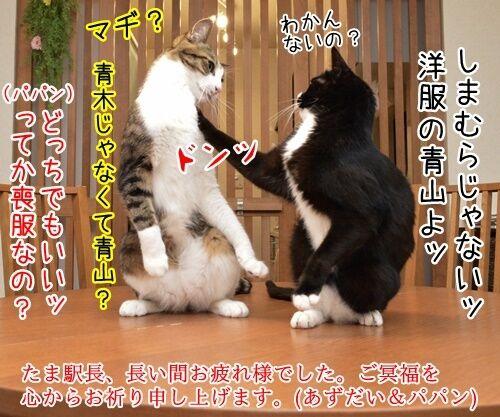 たま駅長のご冥福をお祈りして 猫の写真で4コマ漫画 4コマ目ッ
