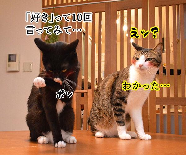 「好き」って10回言ってみてッ 猫の写真で4コマ漫画 1コマ目ッ