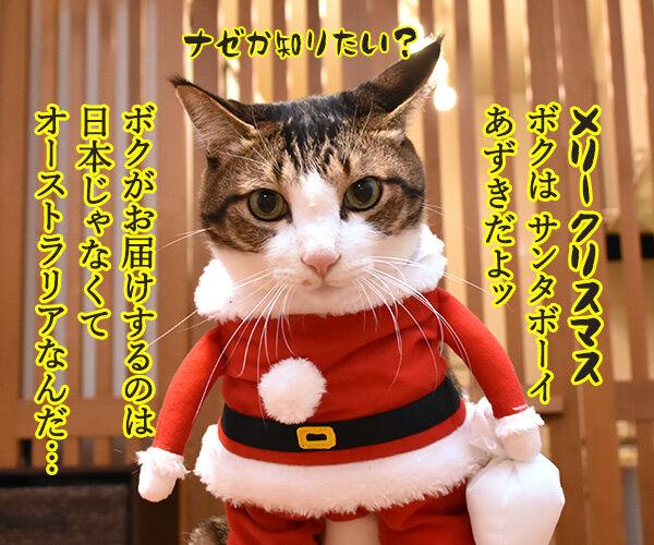 サンタガールとサンタボーイがプレゼントをお届けするわよッ 猫の写真で4コマ漫画 3コマ目ッ