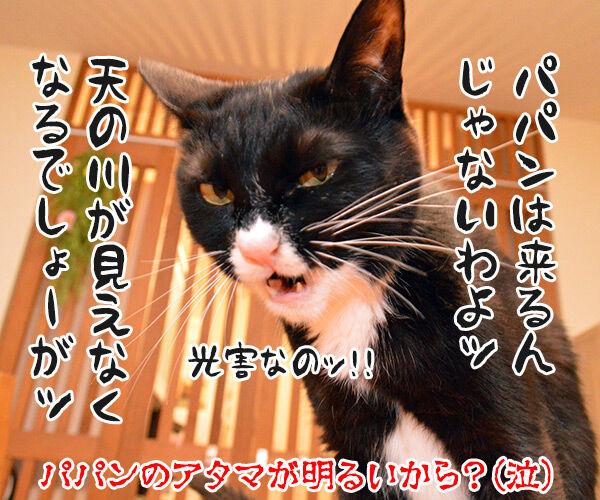七夕 織姫と彦星が年に一度会える日 猫の写真で4コマ漫画 4コマ目ッ