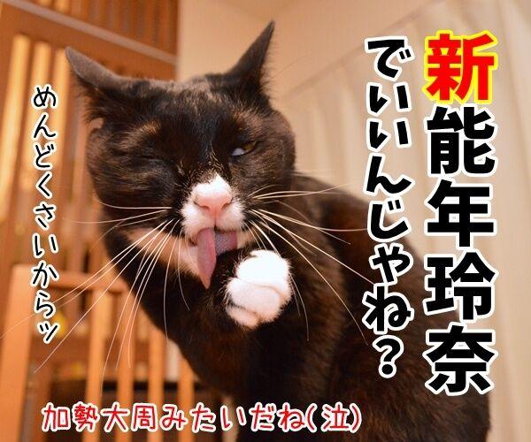 能年玲奈さんが「◯◯」に改名して再出発なんですってッ 猫の写真で4コマ漫画 4コマ目ッ