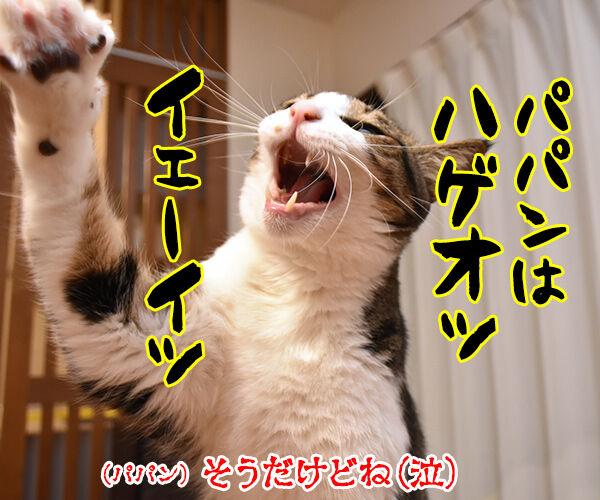 イモ欽トリオごっこするよーッ 猫の写真で4コマ漫画 4コマ目ッ
