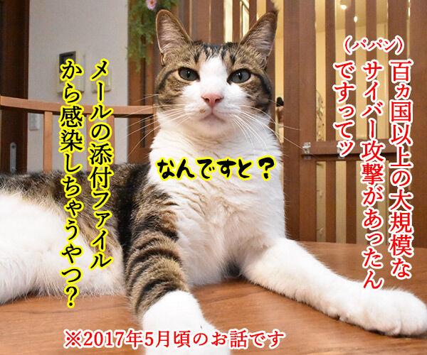 ウィスルによる大規模サイバー攻撃があったんですってッ 猫の写真で4コマ漫画 1コマ目ッ