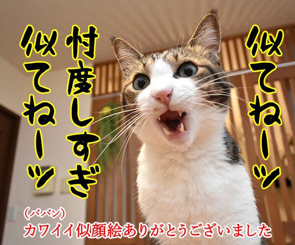 パパンの似顔絵をいただいたのよッ 猫の写真で4コマ漫画 2コマ目ッ