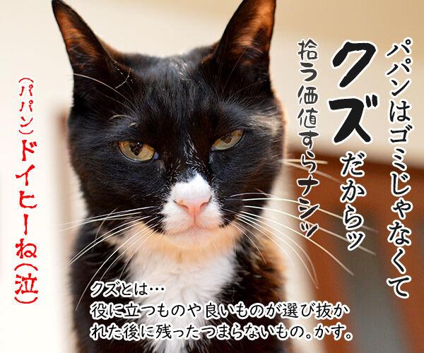 きょうは、ごみゼロの日 猫の写真で4コマ漫画 4コマ目ッ