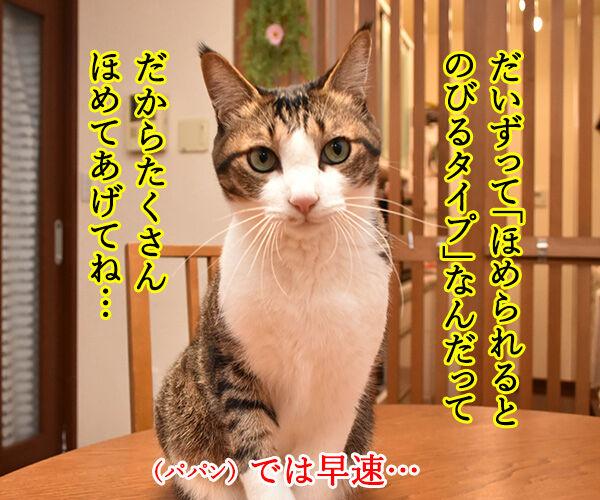 アタチ、ほめられるとのびるタイプなの 猫の写真で4コマ漫画 1コマ目ッ