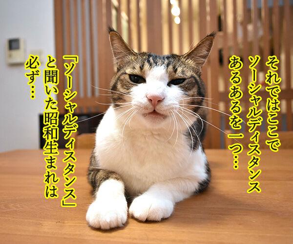 ソーシャルディスタンスのあるあるなのよッ 猫の写真で4コマ漫画 3コマ目ッ