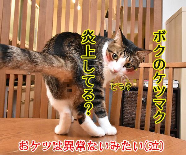 目がゴロゴロしてるのよッ 猫の写真で4コマ漫画 4コマ目ッ
