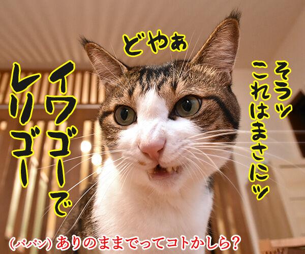 『劇場版 岩合光昭の世界ネコ歩き』は本日公開なのッ 猫の写真で4コマ漫画 2コマ目ッ