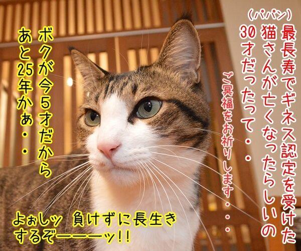 世界最長寿の猫Scooterさんが永眠 30歳でした 猫の写真で4コマ漫画 1コマ目ッ