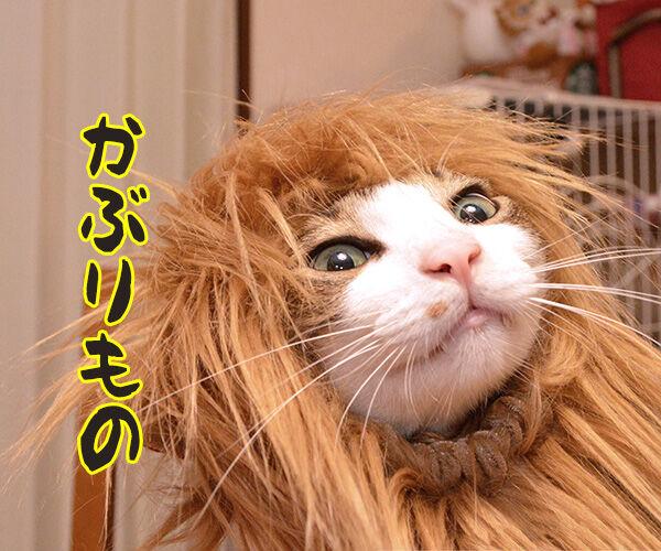 今までにした『かぶりもの』を集めてみたよッ 猫の写真で4コマ漫画 7コマ目ッ
