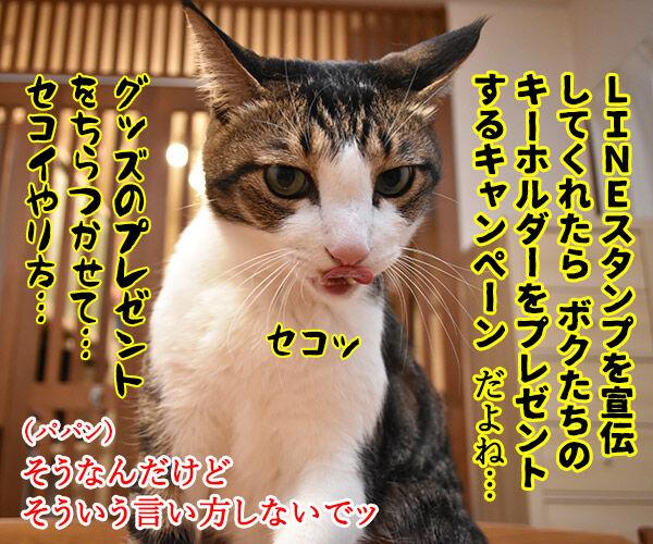 皆様に感謝の気持ちを込めて… キャンペーン第2弾なのよッ 猫の写真で4コマ漫画 3コマ目ッ