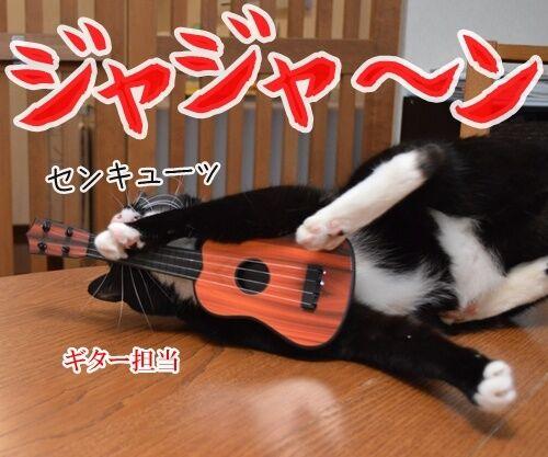 ライブハウス パパンちにようこそッ 猫の写真で4コマ漫画 1コマ目ッ