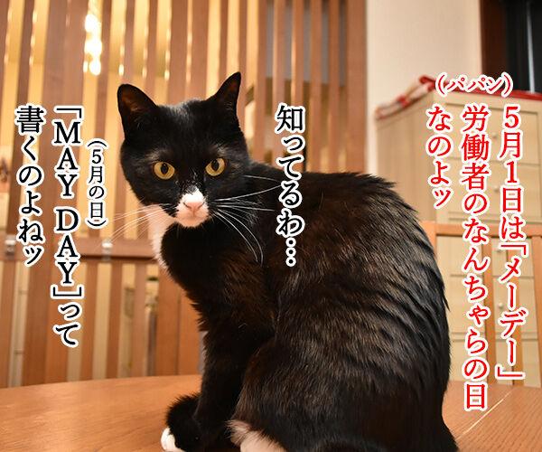5月1日は何の日かしらッ? 猫の写真で4コマ漫画 1コマ目ッ