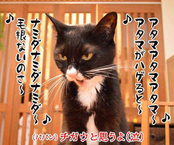 今日の晩ゴハンはおさかな天国ッ 猫の写真で4コマ漫画 4コマ目ッ