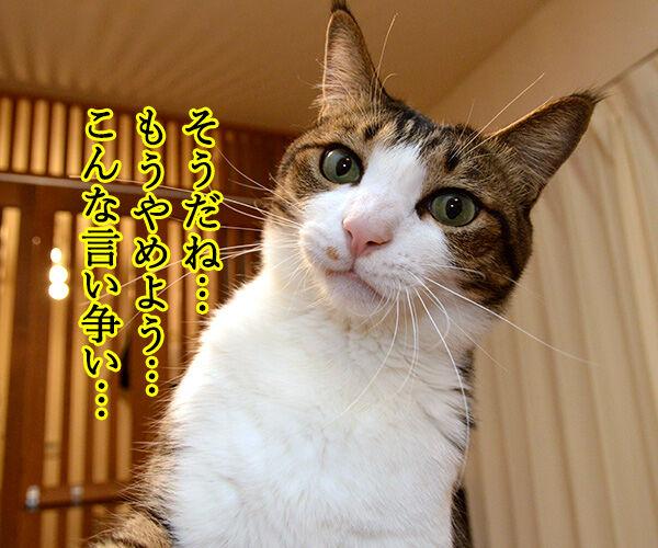 きのこの山 vs たけのこの里 猫の写真で4コマ漫画 2コマ目ッ