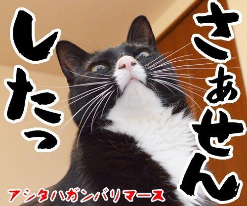 お世話になっております。 猫の写真で4コマ漫画 4コマ目ッ