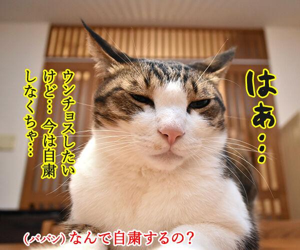 ウンチョスは自粛しなくちゃなのッ 猫の写真で4コマ漫画 1コマ目ッ