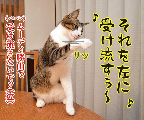 パパンの説教 其の二 猫の写真で4コマ漫画 4コマ目ッ