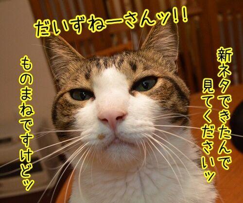 ネタ見せ 其の二 猫の写真で4コマ漫画 1コマ目ッ