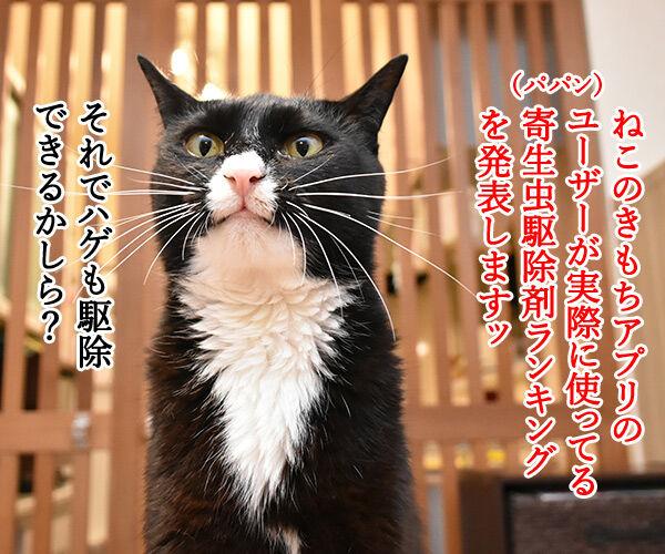 使っている寄生虫駆除剤ランキング 猫の写真で4コマ漫画 1コマ目ッ