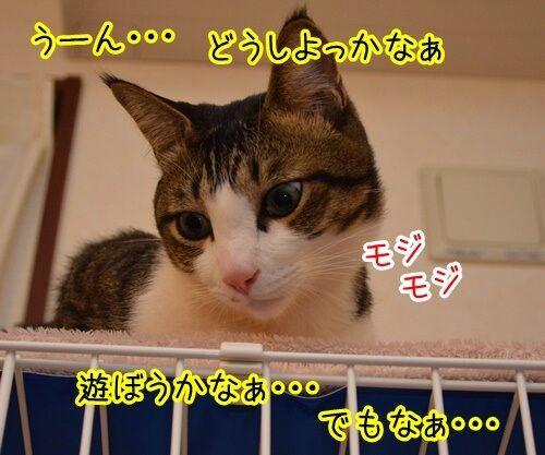こっちにおいで 猫の写真で4コマ漫画 3コマ目ッ