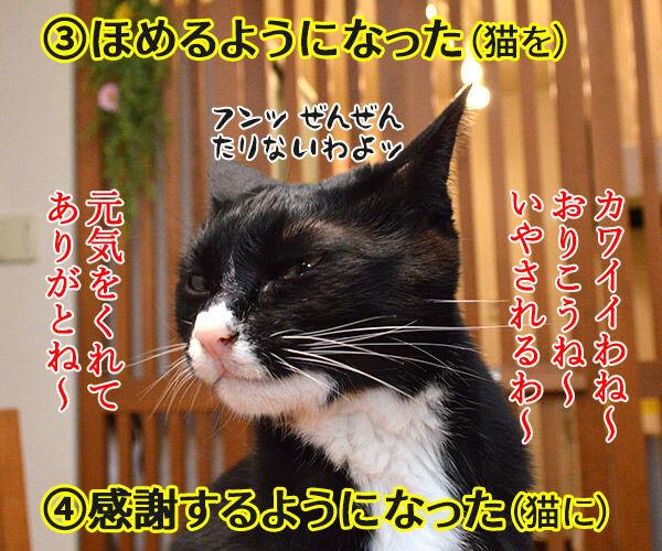 ペットを飼うのは夫婦円満の秘訣よね 猫の写真で4コマ漫画 3コマ目ッ