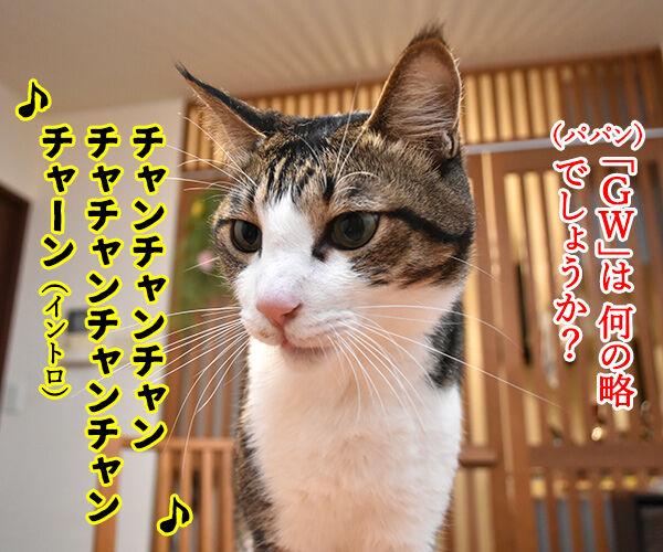 「GW」って何の略かしらッ? 猫の写真で4コマ漫画 1コマ目ッ