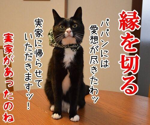 国語の授業 其の二 猫の写真で4コマ漫画 4コマ目ッ