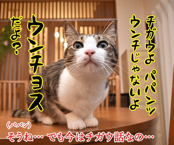 パパンのブログって… 猫の写真で4コマ漫画 2コマ目ッ