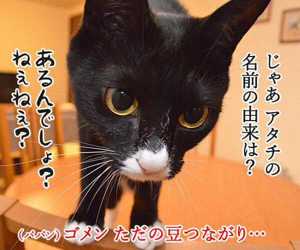 名前の由来 猫の写真で4コマ漫画 2コマ目ッ