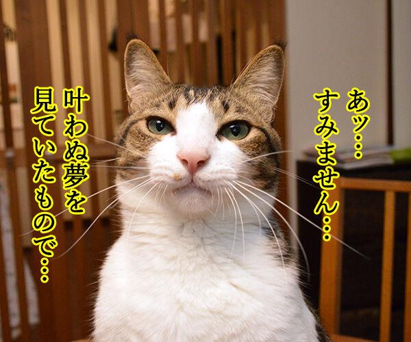 ヤンキー中学生 だいず 猫の写真で4コマ漫画 2コマ目ッ