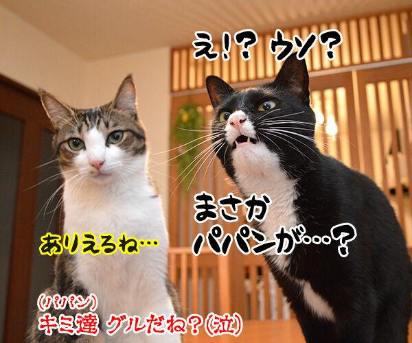だれがやったのッ? 猫の写真で4コマ漫画 4コマ目ッ