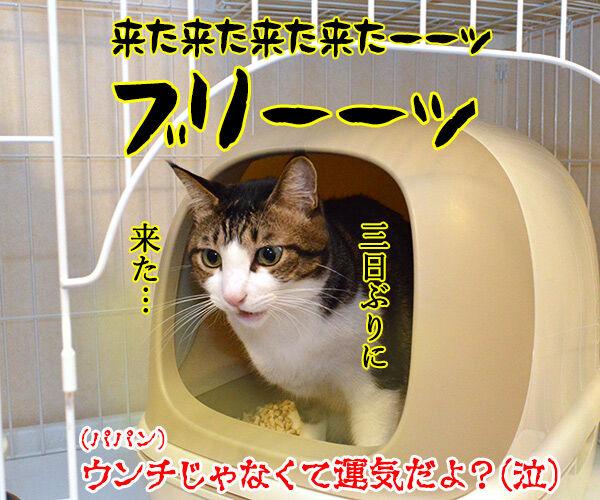 ショックアイさんの待ち受け画像で運気アップなのよッ 猫の写真で4コマ漫画 4コマ目ッ
