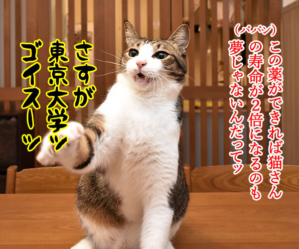東大教授が腎臓病に効く薬を開発してるんですってッ 猫の写真で4コマ漫画 2コマ目ッ