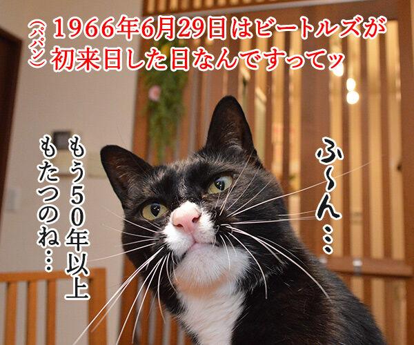 6月29日はビートルズ記念日なんですってッ 猫の写真で4コマ漫画 1コマ目ッ