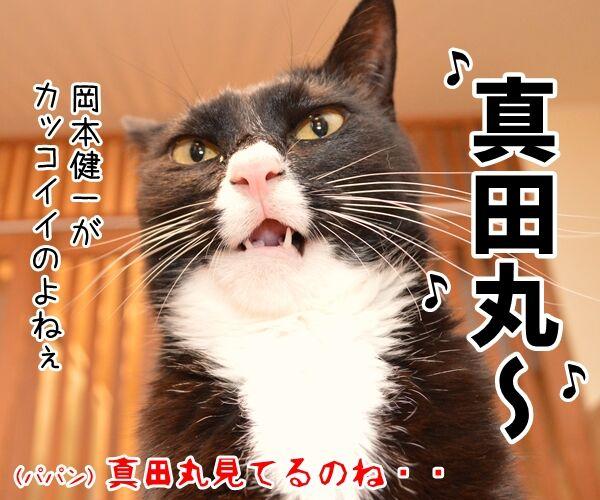 今年こそコタツ買ってくれない? 猫の写真で4コマ漫画 4コマ目ッ